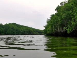 Icaros, el canto medicinal de la selva