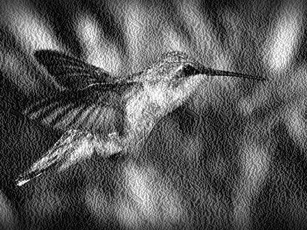 colibri-de-oro