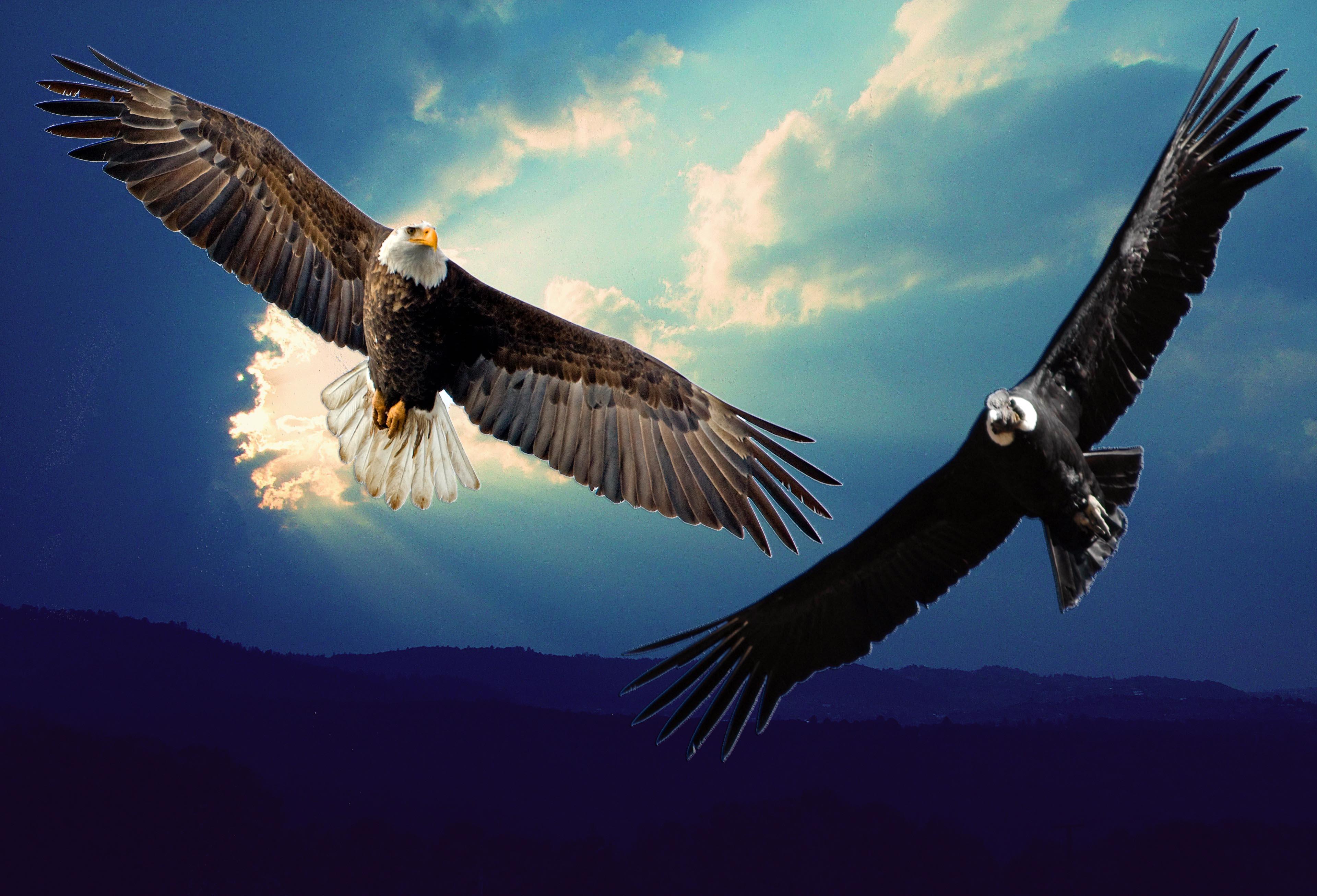 el guila y el condor vuelan juntos otra vez takiruna