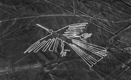 Condor de Nazca