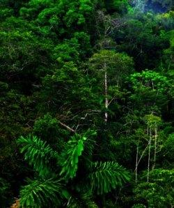 selva verde
