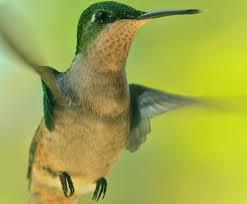 colibriggg