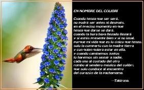 llamado del colibri