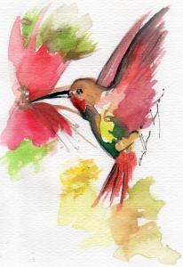 colibri takiruna