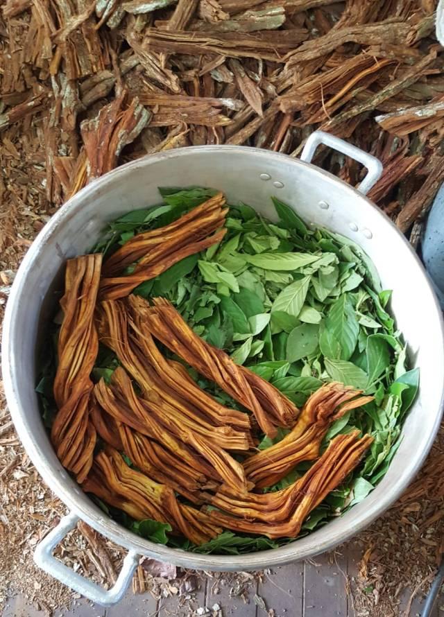 ayahuasca chacruna
