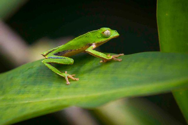 Reserva y Parque Nacional del Manu